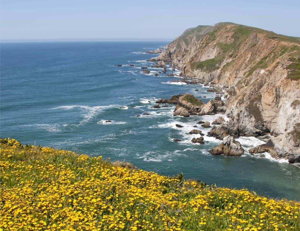 Goldfields and Seascape at Chimney Rock in Point Reyes California
