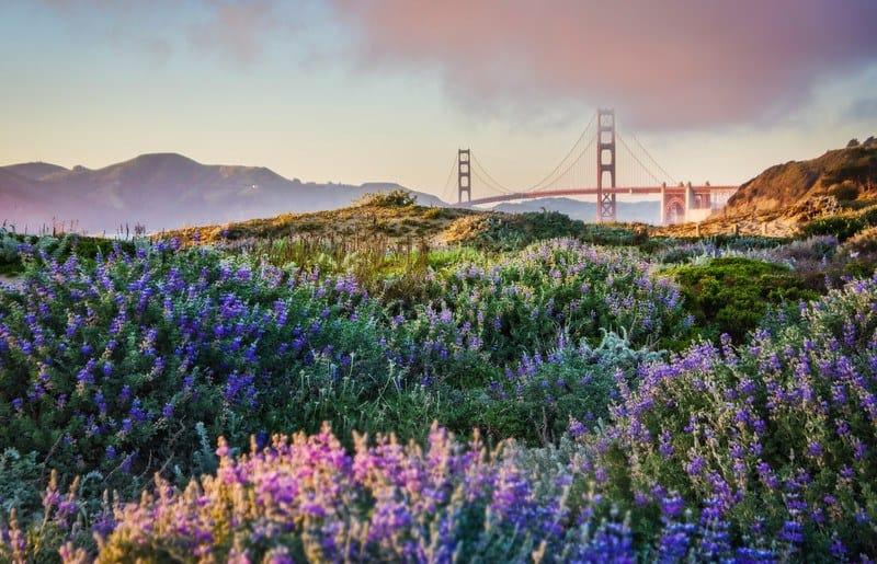 San Francisco Spring Super Blooms